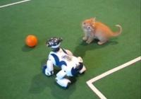 AILAB - Robot köpeklerle yavru kedi futbol oynuyor